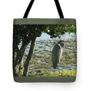 Afternoon Sunning  Tote Bag