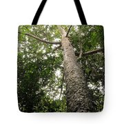 Agathis Borneensis Tree Tote Bag