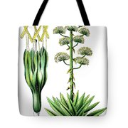 Agave Americana, Common Names Century Plant, Maguey Or American  Tote Bag