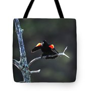 Agelaius Phoeniceus Tote Bag