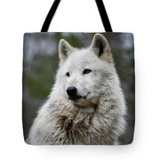 Alawa The Wolf Rests Tote Bag