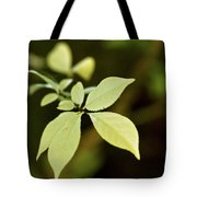 Albino Branch Tote Bag