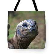 Aldabra Giant Tortoise's Portrait Tote Bag