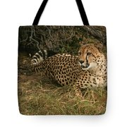 Alert Cheetah Tote Bag