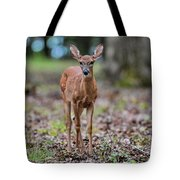 Alert Fawn Deer In Shiloh National Military Park Tennessee Tote Bag