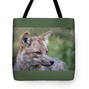 Alert Fox  Tote Bag