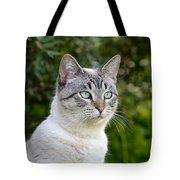 Alert Tabby With Blue Eyes Tote Bag