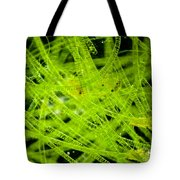 Algae Spirogyra Sp., Lm Tote Bag