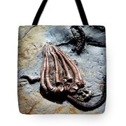 Alien Fossil   Tote Bag