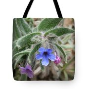 Alkanna Strigosa Tote Bag