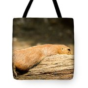 All Stretched Out Tote Bag