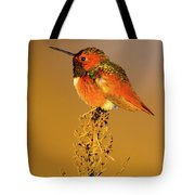 Allen's Hummingbird II Tote Bag