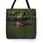 Alligator Eyes Tote Bag
