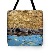 Alligator In The Sun Tote Bag