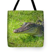 Alligator Up Close  Tote Bag