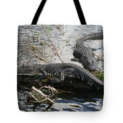 Alligators In An Everglades Swamp Tote Bag