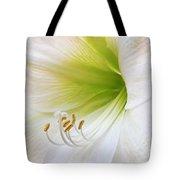 Alluring Amaryllis Square Tote Bag