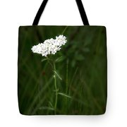 Alpine Yarrow Wildflower 2 Tote Bag