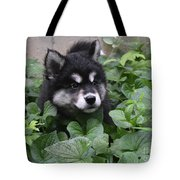 Alusky Pup Peaking Out Of Green Foliage Tote Bag