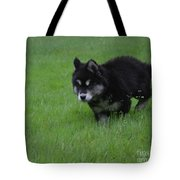 Alusky Puppy Creeping Through Green Grass Tote Bag