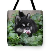 Alusky Puppy Dog Licking The Tip Of His Nose Tote Bag