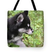 Alusky Puppy Tip Toeing Through Green Foliage Tote Bag