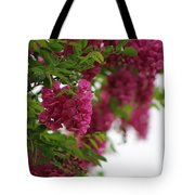 Amaranth Pink Flowering Locust Tree In Spring Rain Tote Bag