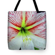 Amaryllis Beauty Tote Bag