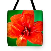 Amaryllis Contrast Orange Amaryllis Flower Appearing To Float Above A Deep Green Background Tote Bag