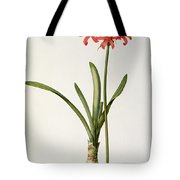 Amaryllis Curvifolia Tote Bag by Pierre Redoute