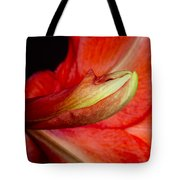 Amaryllis Flower About To Bloom Tote Bag