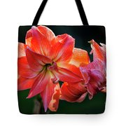 Amaryllis In February 5472 Tote Bag