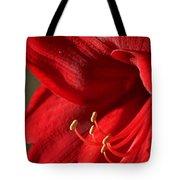 Amaryllis6689 Tote Bag