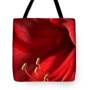 Amaryllis6709 Tote Bag
