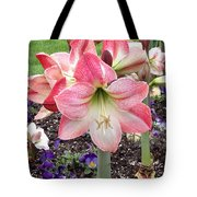 Amazing Amaryllis - Pink And White Apple Blossom Hippeastrum Hybrid Tote Bag