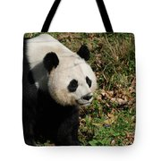 Amazing Giant Panda Bear Sitting In A Grass Field Tote Bag