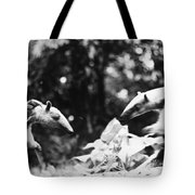 Amazon: Anteater Tote Bag