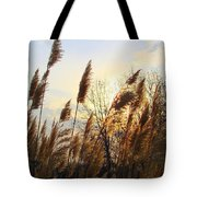 Amber Waves Of Pampas Grass Tote Bag