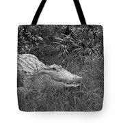 American Alligator 2 Bw Tote Bag