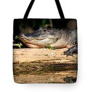 American Alligator Suns Itself Tote Bag