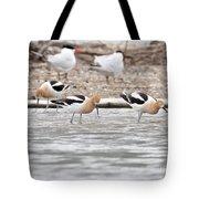 American Avocets  Tote Bag