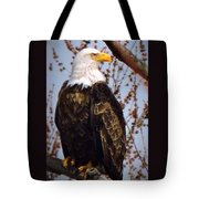 American Bald Eagle - Iowa Tote Bag
