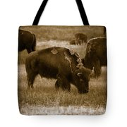 American Bison Grazing - Bw Tote Bag