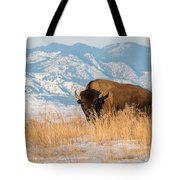 American Bison In Front Of The Rocky Mountains Tote Bag