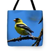 American Goldfinch 1 Tote Bag