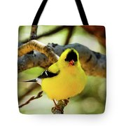American Goldfinch On Aspen Tote Bag