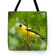 American Goldfinch Sittin' In A Tree Tote Bag