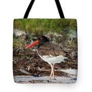 American Oyster Catcher Tote Bag