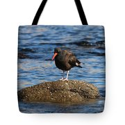 American Oystercatcher - 2 Tote Bag