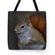 American Red Squirrel Portrait Tote Bag